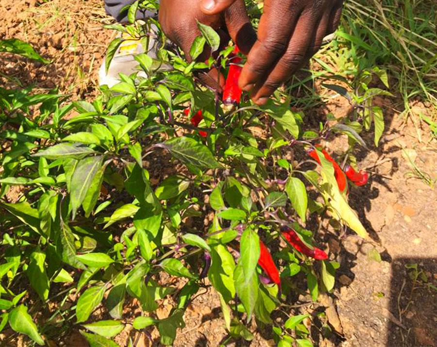 SoilfulCity + FoodTalksDC